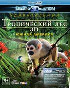 Тропический лес 3D