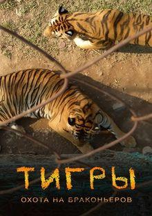 Тигры: Охота на браконьеров, 2020