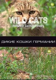 Дикие кошки в лесах Германии, 2008