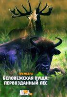 Беловежская пуща: первозданный лес