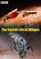 Тайная жизнь мошкары