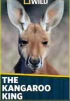National Geographic. Король кенгуру