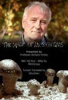 BBC: Магия грибов (Тайная жизнь грибов)
