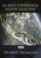 BBC: Машина времени в кусочке янтаря