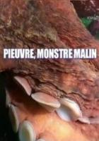 Хитроумный осьминог