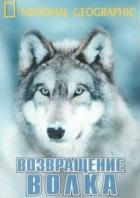 National Geographic: Возвращение волка