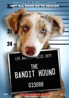 Пёс бандит