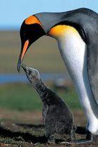 Пингвины. История о птицах, которым захотелось стать рыбами