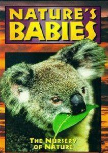 Детство в дикой природе, 1997