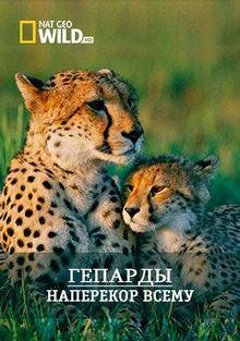 Гепарды - Наперекор всему, 2008