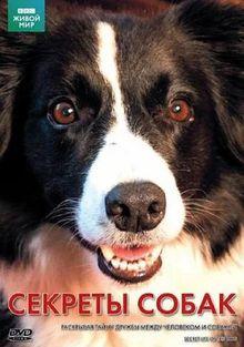 Тайная жизнь собак, 2010