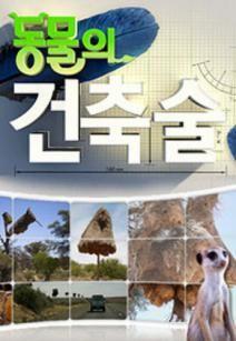 Животные-строители, 2011